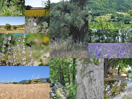 PROVENCE_20104