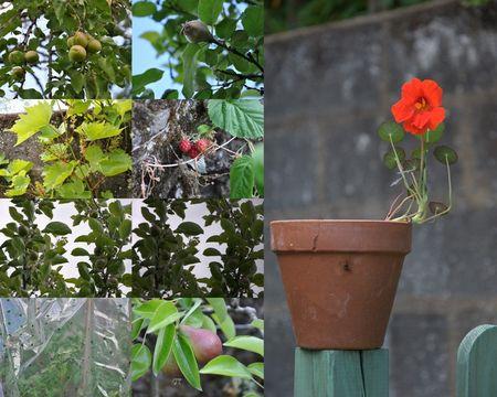 2011_06_03_jardin